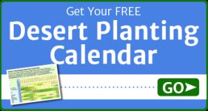desert-planting