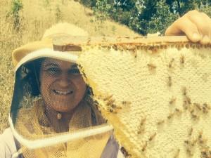 Bee Suite