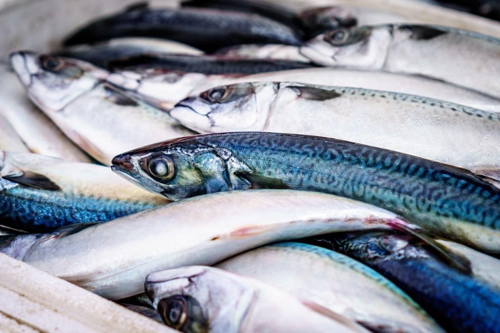 fish-933187_1280