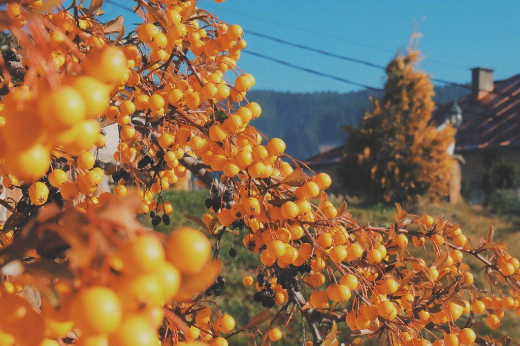 nature-789620_1280