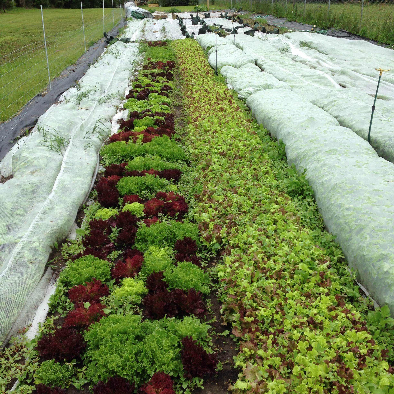 Keri fox on spin farming urbanfarmu - Profitable crops small plots ...