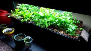 indoor-gardens