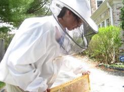 julia beekeeping 5 2 2014 7