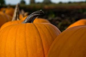 pumpkins-216014_1280
