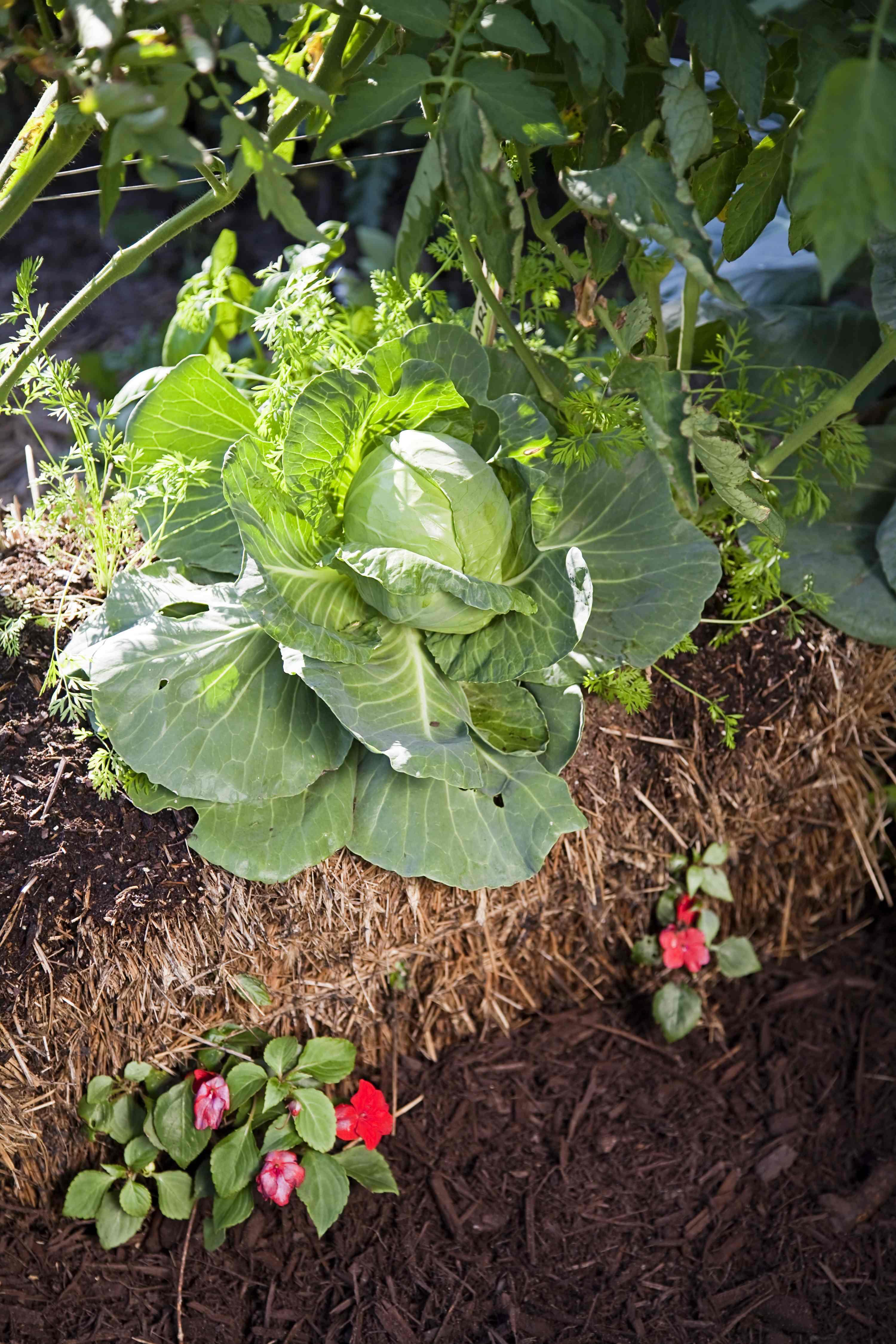 Straw bale gardens joel karsten pdf fasci garden for Straw bale gardening joel karsten