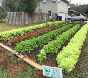 Donated lawn as a garden plot