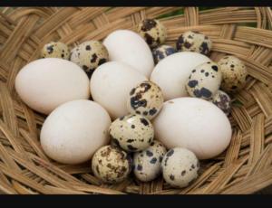 Fulcrum Eggs 2