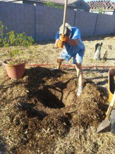 Ray Jess digging a planting hole in an southern Arizona backyard.