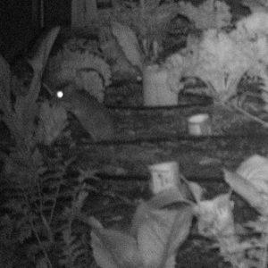 close up of garden thief
